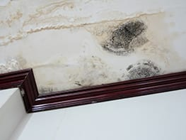 mold removal in maryland